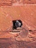 Gołębia dziura w Agra forcie Obrazy Royalty Free