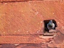 Gołębia dziura w Agra forcie Zdjęcia Stock