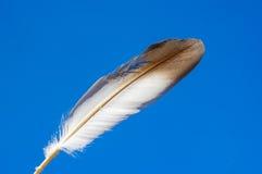 Gołębia piórko Obraz Royalty Free