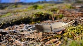 Gołębia piórko Fotografia Royalty Free