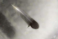 Gołębia piórko na wycieku ropy Obrazy Royalty Free