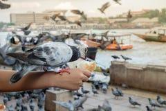 Gołębie blisko nawadniają, ptaki, błękitni ptaki w sposobie Fotografia Stock