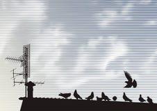 gołębie dach ilustracja wektor
