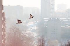 Gołębie i miasto Obrazy Stock