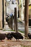 Gołębie je na brukowiec ulicie Lisbon zdjęcia royalty free