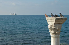 Gołębie na colum Zdjęcia Royalty Free