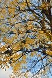 Gołębie na drzewie Zdjęcia Stock
