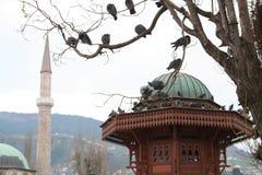 Gołębie na Sebilj Zdjęcia Royalty Free