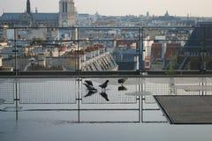 Gołębie odbijali w kałuży na Paryskim Francja dachu obraz royalty free