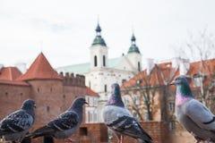 Gołębie przeciw barbakanu fortecy w historycznym centrum Warszawa Polska fotografia stock