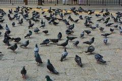Gołębie przy bramą India Obrazy Royalty Free