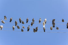 Gołębie siedzą na drutach Obraz Royalty Free