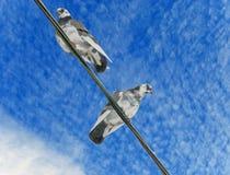 Gołębie siedzą na drutach Fotografia Royalty Free