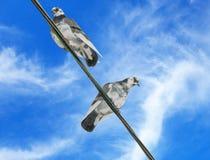 Gołębie siedzą na drutach Obrazy Stock
