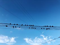 Gołębie siedzą na drutach na niebieskiego nieba tle Obrazy Royalty Free