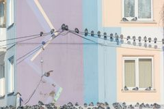 Gołębie siedzą na drutach Wiele ptaki siedzą na drutach blisko domu Ptak na dachu dom Zdjęcia Royalty Free