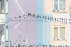 Gołębie siedzą na drutach Wiele ptaki siedzą na drutach blisko domu Ptak na dachu dom Zdjęcie Royalty Free