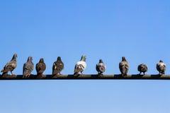 Gołębie trzymają na elektryczności poczta Obraz Royalty Free
