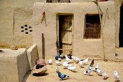 Gołębie w błoto domu fotografia royalty free
