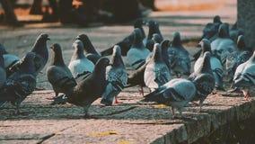 Gołębie w parku zbiory