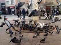 Gołębie Wokoło fontanny Istanbuł zdjęcia stock
