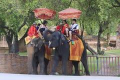 Gościa słonia jeździecki plecy w Ayuthaya gubernialnej centrali Tajlandia Obraz Stock