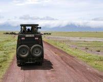 Goście na dżipów obrazkach dzikie zwierzęta w Ngorongoro kraterze Fotografia Stock