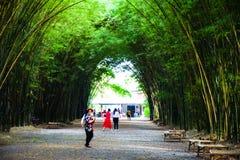 Goście piękny bambus wysklepiają przy Watem Chulapornwanaram obrazy royalty free