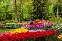 Goście w wiosny okwitnięcia Keukenhof parku w Amsterdam terenie, holandie Zdjęcie Stock