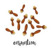 Goździk odizolowywający przedmiota nakreślenie Pikantność dla jedzenia Kulinarna podprawa Obrazy Royalty Free