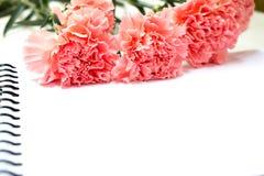 Goździka kwiat na białym tle z skutkiem Zdjęcia Stock