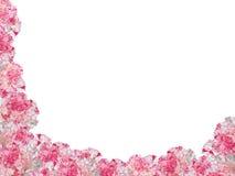 goździki obramiają różnobarwnego Fotografia Stock