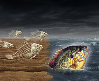 Go All The Way. Survival success as a surreal business metaphor for thinning the herd or best of breed symbol as a group of dead fish skeletons who failed to Royalty Free Stock Image