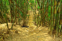 Go into bamboo forest Stock Photos