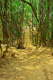 Go into bamboo forest Stock Photo