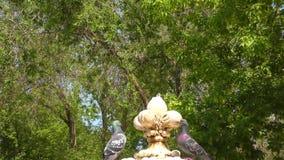Go??bka i fontanna zbiory