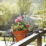 Goździków kwiaty Fotografia Royalty Free
