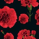 Goździka kwiat Obrazy Stock