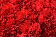 goździki czerwone Zdjęcia Royalty Free