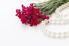 goździki czerwone Fotografia Royalty Free