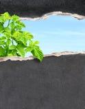 Go green Stock Image