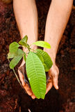 Go Green. And save our planet with trees royalty free stock image