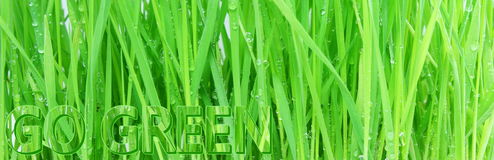 Go green Nature ecology organic concept Royalty Free Stock Photo
