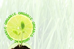 Go green Nature ecology organic concept Royalty Free Stock Images
