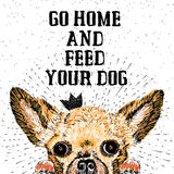 Go home and feed your dog. Sign with cute smiling but hungry dog. Motivational lettering on texture background. Inscriptions for dog lovers. Inspirational Royalty Free Stock Image