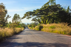 Go straight ahead. Rural road and big tree in countryside Stock Image
