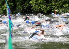 GO!!! Swimmers Race at the Triathlon Start Line. Triathlon kicks off as swimmers pass the start line flags. Johnsons Beach, Guerneville, California, USA stock image