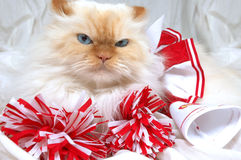 Go Team! Win!. Lexus the cat cheers on her team with red and white pom poms. lexus royalty free stock photography
