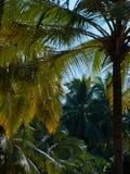 Goa ландшафта Стоковое Фото
