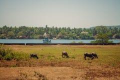 Goa Индии Стоковые Изображения RF